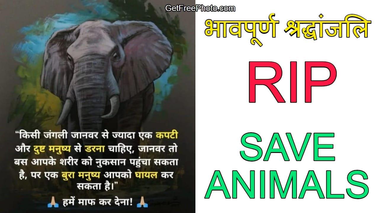 kerala-pregnant-elephant-died-wishes-shradhanjali